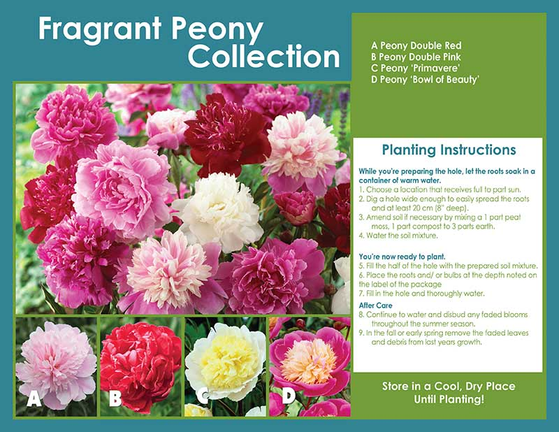 Fragrant Peony Collection Horticana