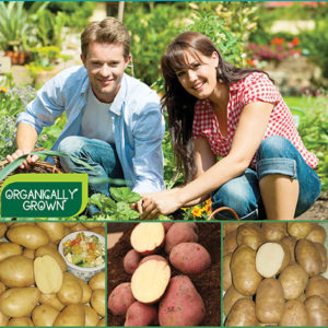 Organic Can Seed Potatoes CA sp17 image only - 72