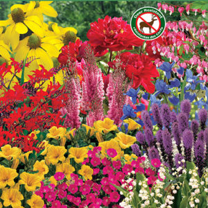 Rugged Perennials for Deer Resistance sp 17 image only - 72