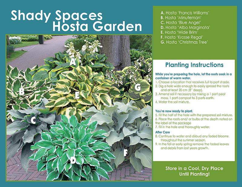 Shady Spaces Hosta Garden Sp18 Pl Inst En Large Horticana