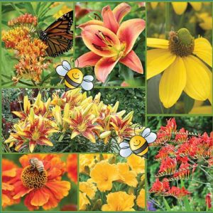 Bees-Knees-Pollinator-Friendly-Garden-image-only-medium