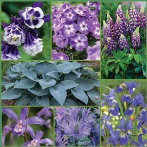 Blue-Sapphire-summer-Garden-s18-image-only-medium