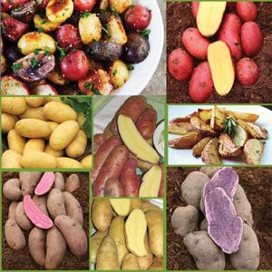 Canadian-Gourmet-Seed-Potatoes-CA-sp18-image-only-medium
