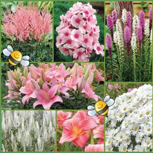 Candy-Shop-Pollinator-Friendly-Garden-image-only-medium