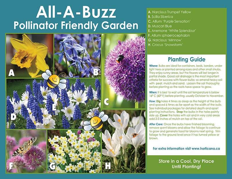 All-A-Buzz - Pollinator Friendly Garden - Instructions