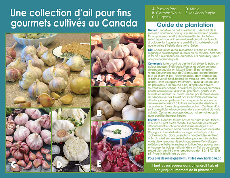 Canadian Grown Gourmet Garlic - French Instructions