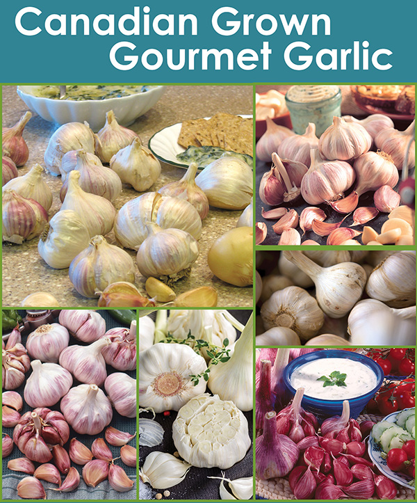 Canadian Grown Gourmet Garlic