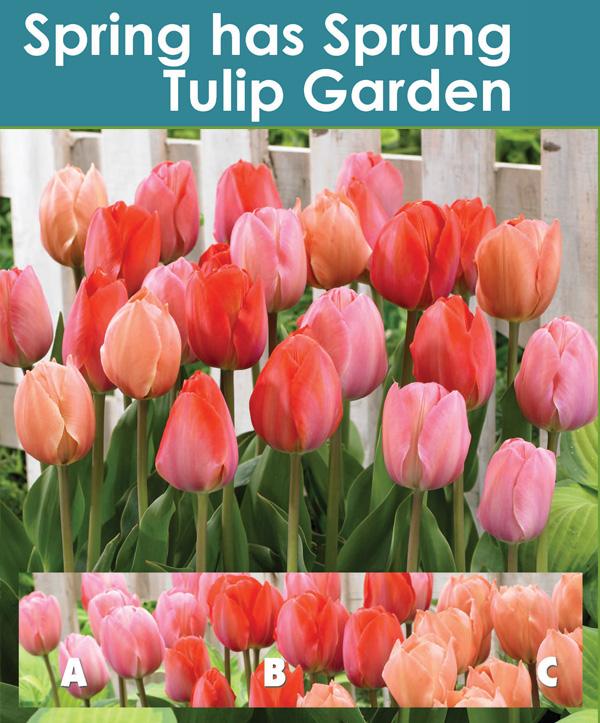 Spring Has Sprung Tulip Garden