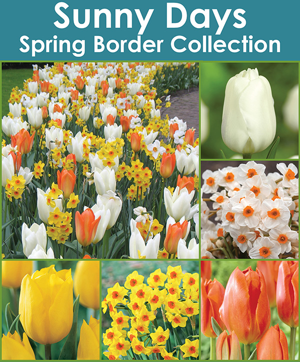 Sunny Days Spring Border Collection