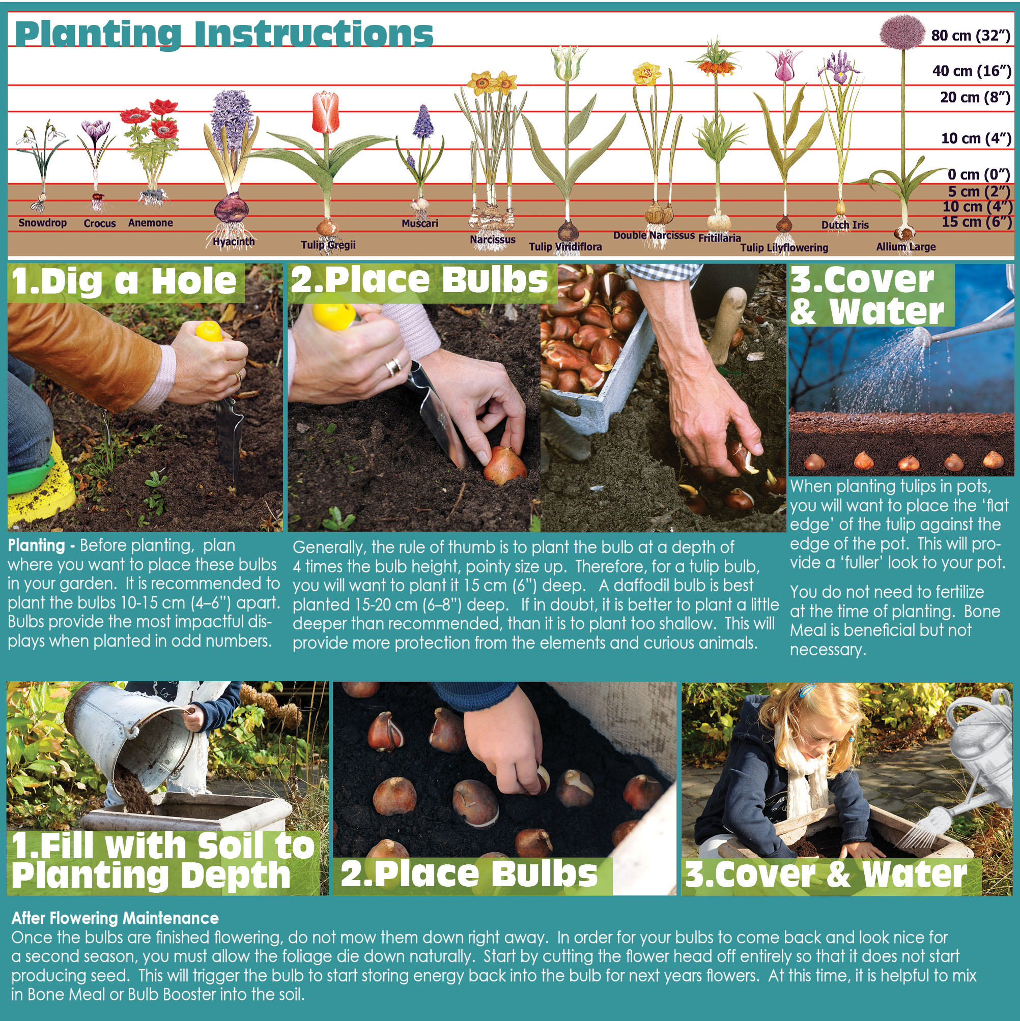 How to Plant Spring Bulbs in the Fall - English Instructions