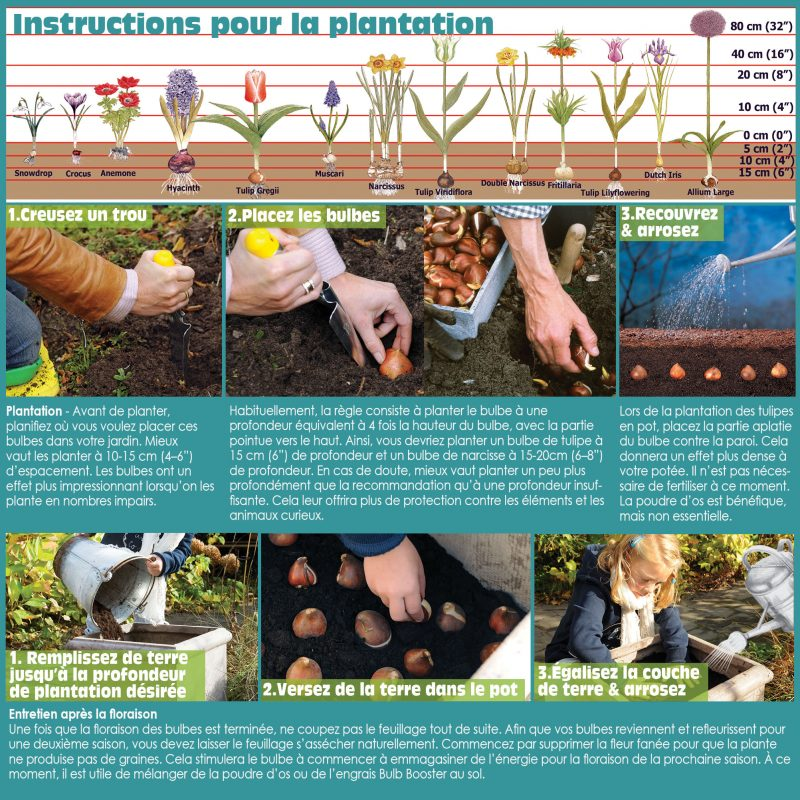 How to Plant Spring Bulbs in the Fall - French Instructions