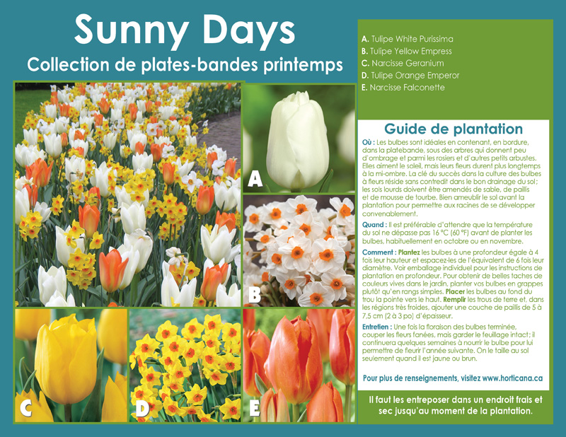 Sunny Days Spring Border Collection - French Instructions