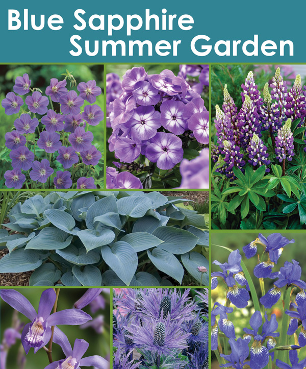 Blue Sapphire Summer Garden - Thumbnail