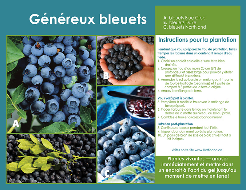 Blueberry Bounty Shrub Collection- Planting Instructions - French