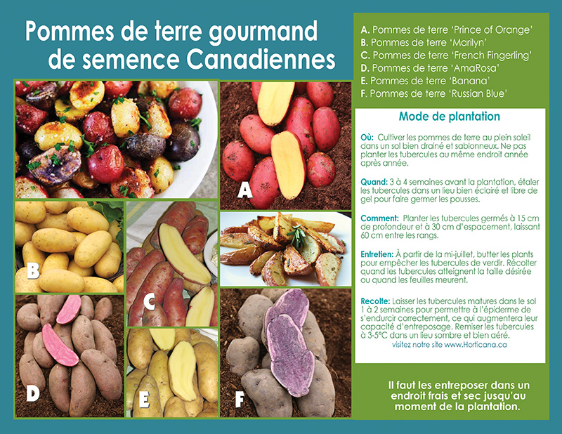 Canadian Gourmet Seed Potatoes - Planting Instructions - French
