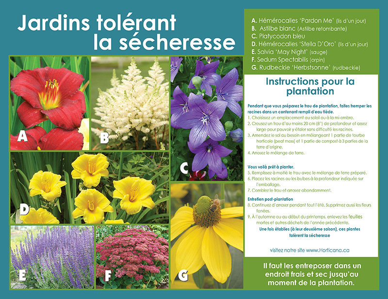 Drought Tolerant Garden Collection - Planting Instructions - French