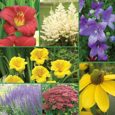 Drought Tolerant Gardens Collection - Feature