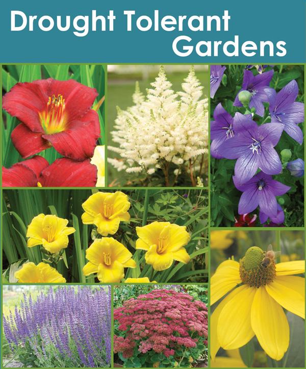 Drought Tolerant Gardens Collection - Thumbnail