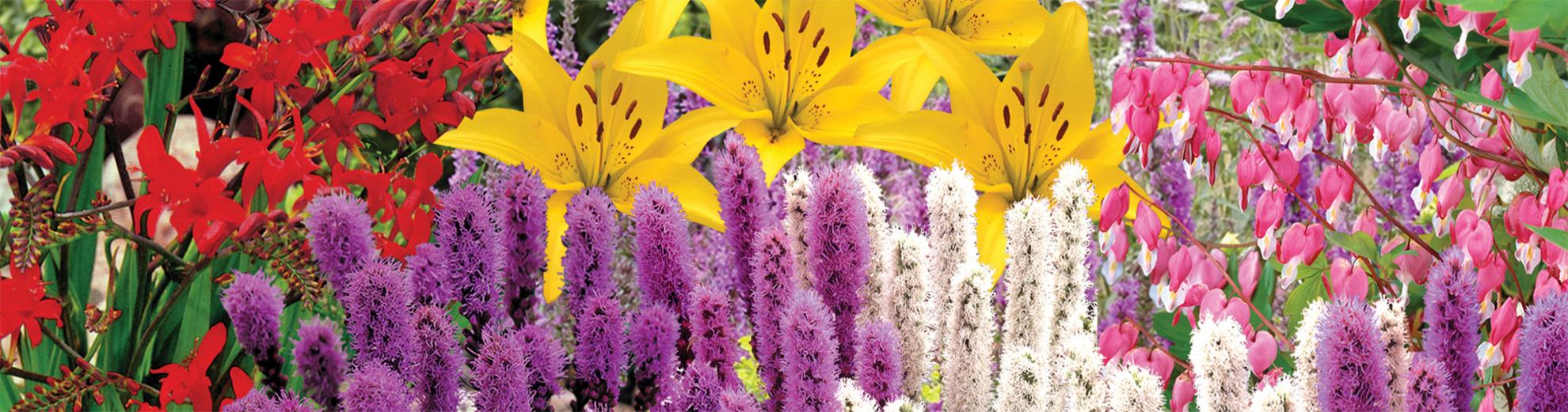 Effortless Perennial Gardens