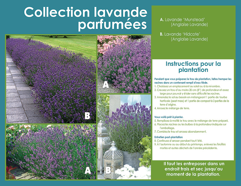 Fragrant Lavender Collection - French