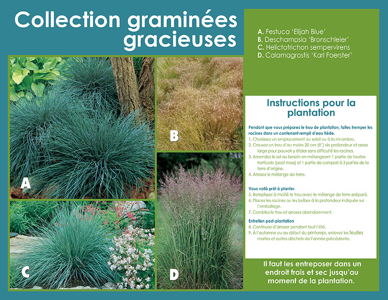 Graceful Grasses Collection - Planting Instructions - French