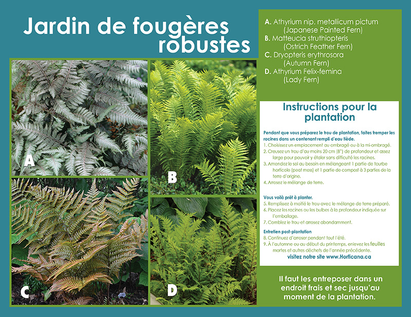 Hardy Ferns Collection - Planting Instructions - French