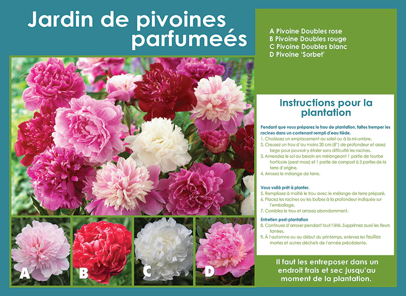 Peony Mix Collection - Planting Instructions - French