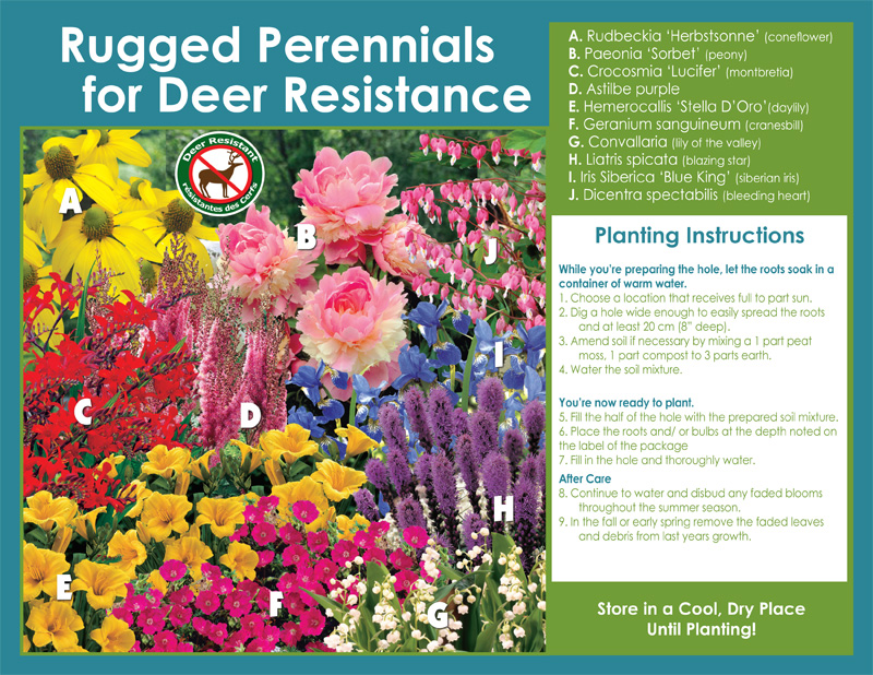 Rugged Perennials Deer-Resistant Assortment - Planting Instructions - English