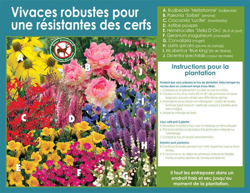Rugged Perennials Deer-Resistant Assortment - Planting Instructions - French