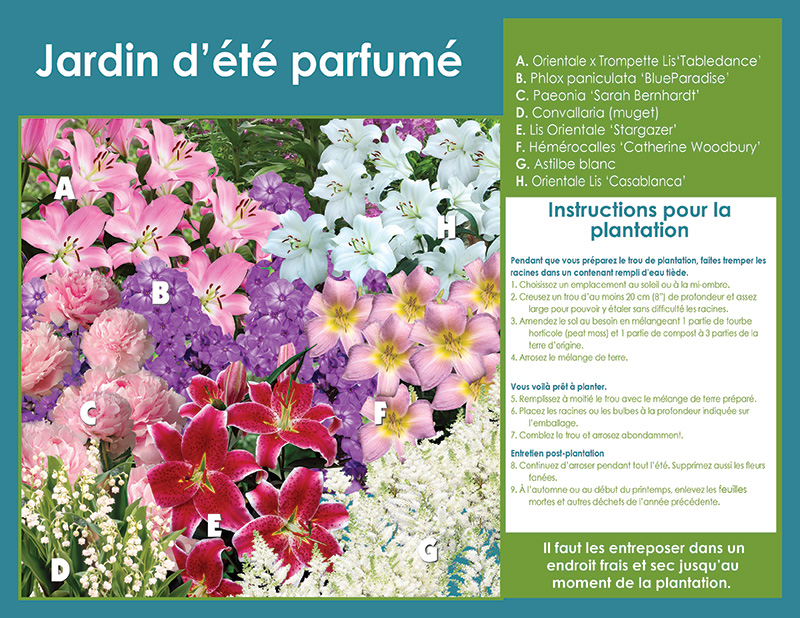 Scented Summer Garden Perennials - Planting Instructions - French