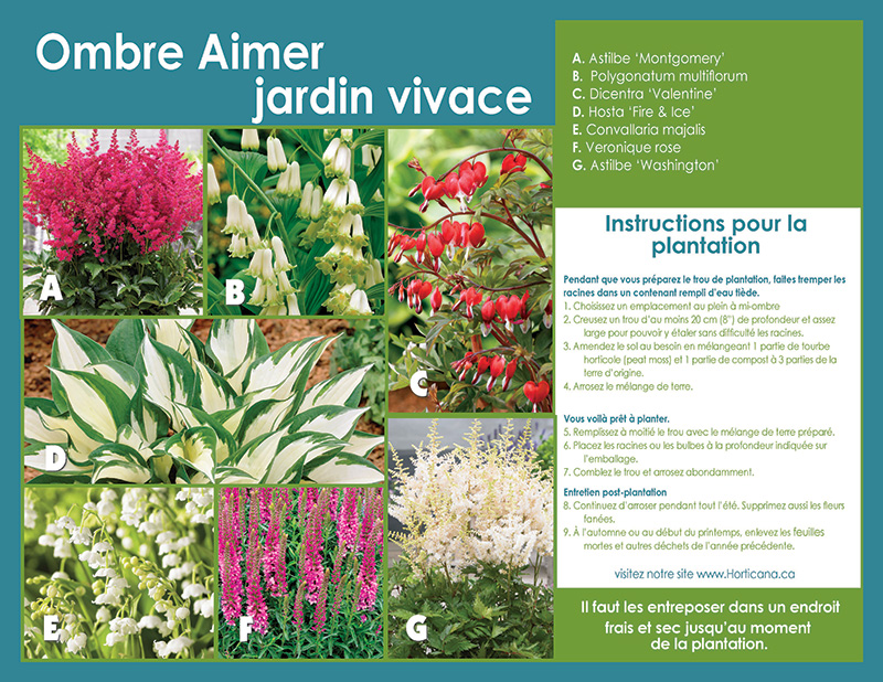 Shade Loving Perennial Garden Collection - Planting Instructions - French