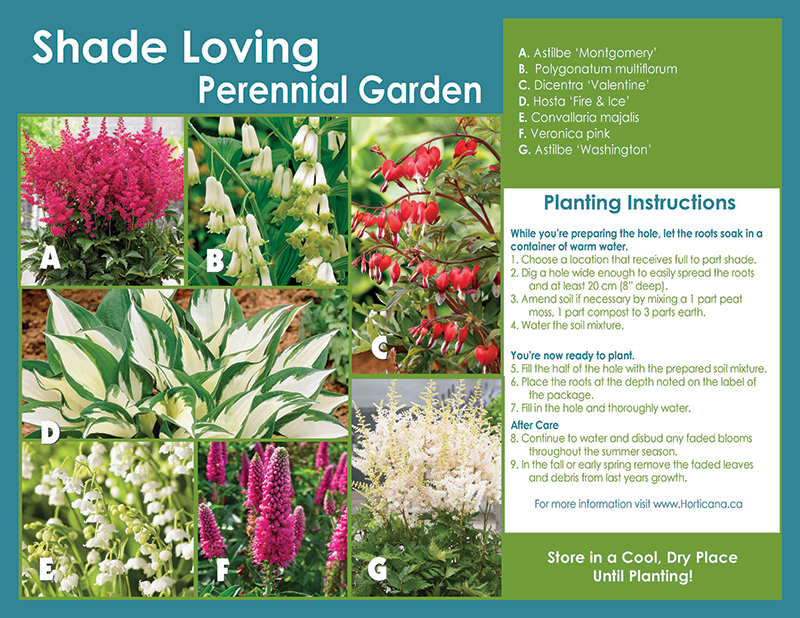 Shade Loving Perennial Garden - Planting Instructions