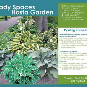 Shady Spaces Hosta Garden - Planting Instructions