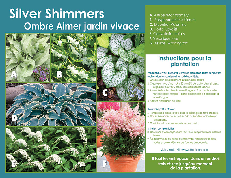 Silver Shimmers Shade Collection - Planting Instructions