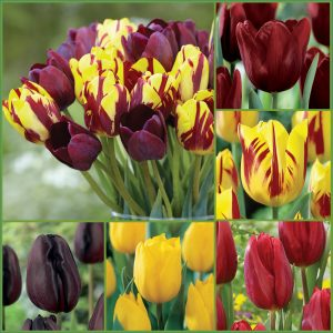 Wine & Cheese Tulips f19 image only