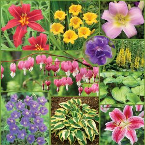 Easy to Grow Perennial Collection Sp20 extra image only
