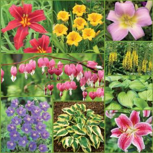 Easy to Grow Perennial Collection Sp21 image ONLY_web